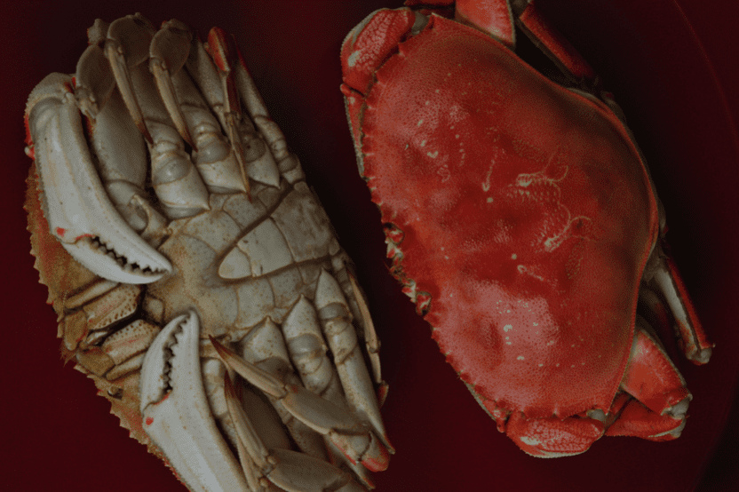 Image of Dungeness Crab
