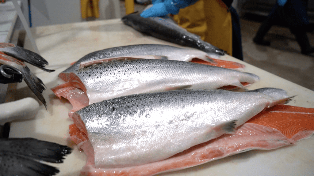 High quality salmon filets being prepared at Pucci Foods' Hayward, Ca facility.